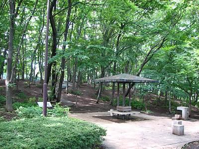 東所沢公園内の雑木林