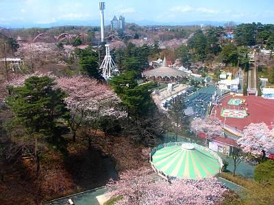 西武園ゆうえんちの桜 その1