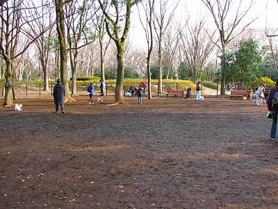 所沢航空記念公園ドッグラン「小さなワンちゃんエリア」
