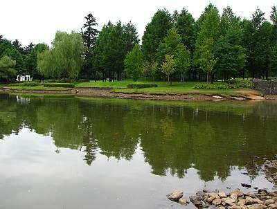 彩の森入間公園の下池