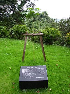 瑞穂町 平和記念碑にある被爆アオギリ二世