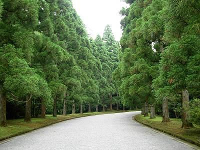 武蔵陵墓地の砂利道