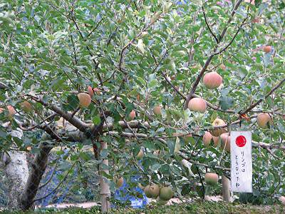 サイボクハム りんご園