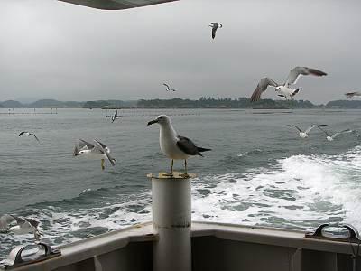 松島遊覧船を追いかけない頭の良いカモメ