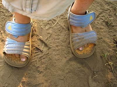 所沢市のひまわり畑は砂地