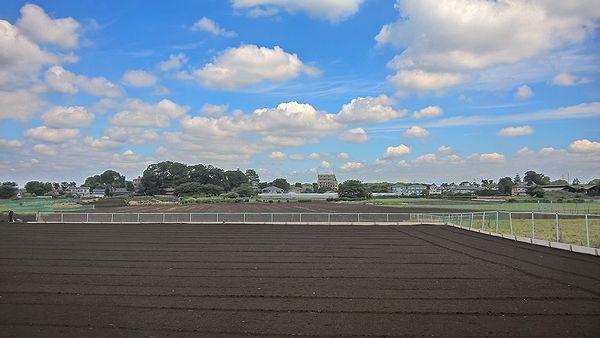 清瀬ひまわりフェスティバル会場の農地