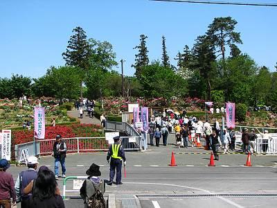 東松山ぼたん園の人ごみ