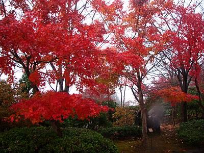 桜山森林公園の紅葉