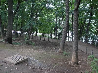 亀ヶ谷公園の雑木林