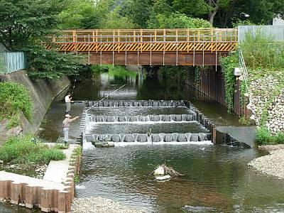 柳瀬川清瀬橋近くで釣りをする人たち