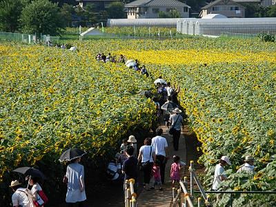 2010年清瀬市ひまわりフェスティバルの様子