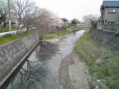 日向橋からの柳瀬川