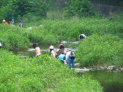 空堀川 小学生の自然観察