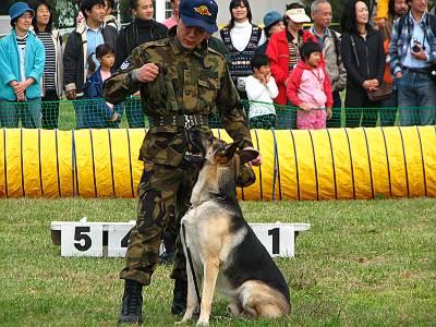 入間航空祭 警備犬訓練展示