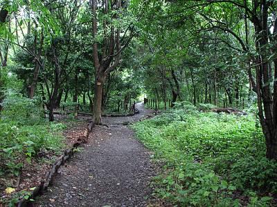 矢川緑地保全地域の散策路