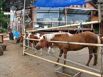 かたくりの湯の目の前の馬やポニー