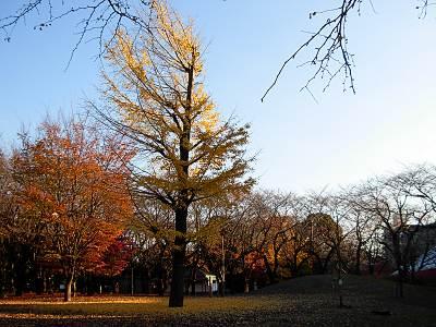 飛鳥山公園の紅葉