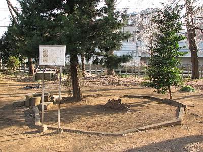 野塩神社にあったチョウセンゴヨウマツ