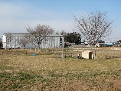 加藤牧場の看板牛
