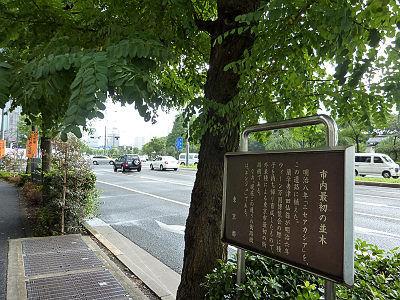 市内最初の並木