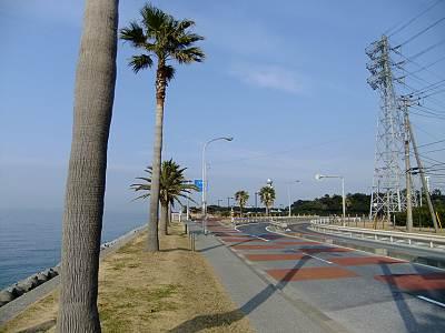 袖ケ浦海浜公園は何となく南国気分