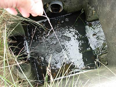 サワガニ釣りをした穴