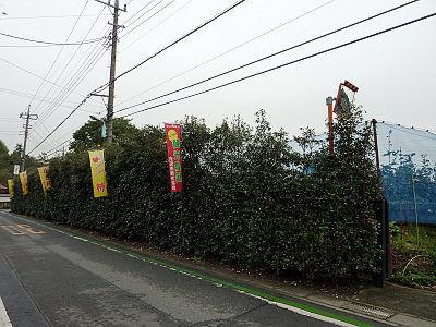 所沢の柿狩り