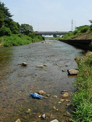柳瀬川の清流その1