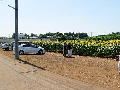 所沢市のひまわり畑2009は駐車場完備