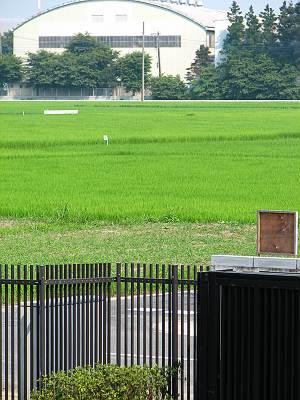 難波田城公園 周りは水田