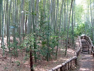 竹林公園(東久留米市)