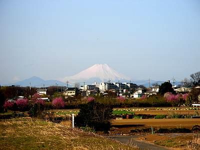 柳瀬川沿いからの富士山