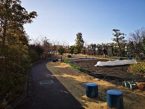 目黒天空庭園の畑