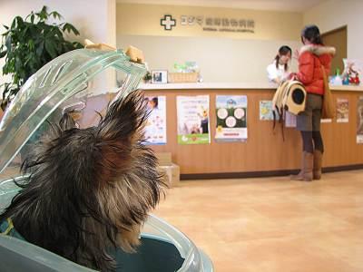 コジマ練馬動物病院