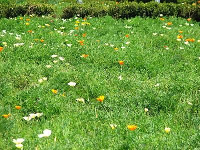 所沢市のお花畑
