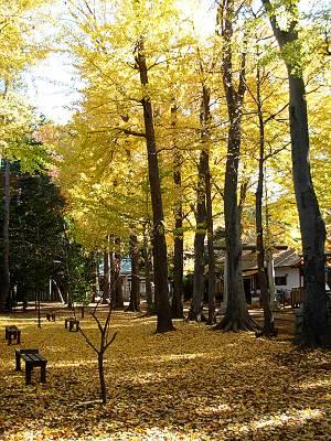 荻窪神明天祖神社の境内