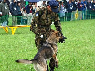 Runway walk 2006 警備犬訓練展示