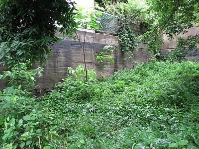 矢川緑地保全地域のコンクリート壁