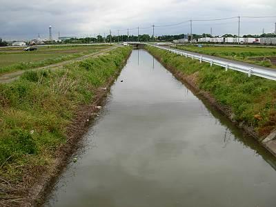 富士見市田んぼ用水路5月第一週