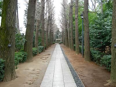 太田黒公園内の並木道