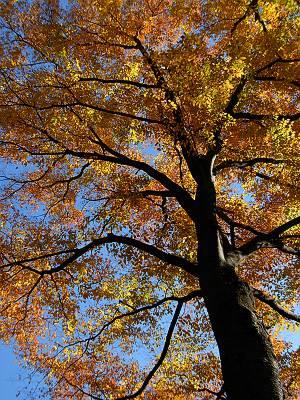荻窪神明天祖神社の木
