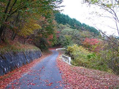 林道広河原逆川線の紅葉その1