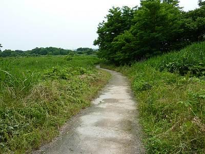 多摩川への道