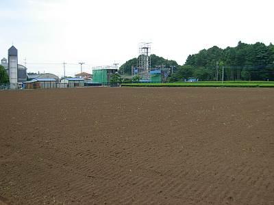 所沢市のひまわり畑だった場所