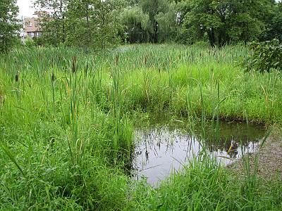 矢川緑地保全地域の湿地帯