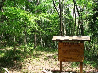 トトロの森5号地