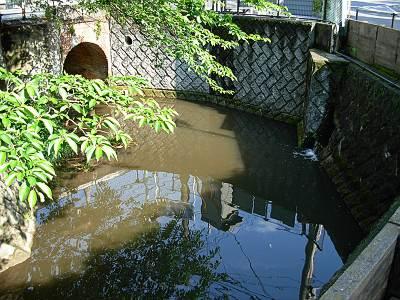 国分寺の湧水が集まって野川へ