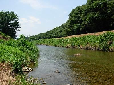 柳瀬川の清流その2