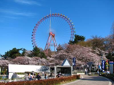 西武園ゆうえんちの桜 その3