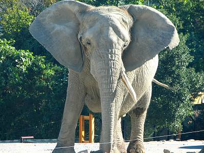 群馬サファリパークの象
